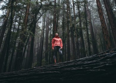 Person standing on a fallen redwood in the middle of other trees