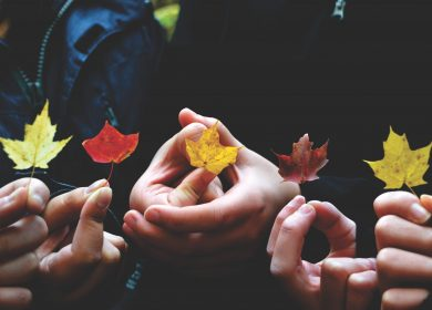 Hands holding maple leaves