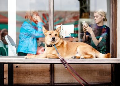 Dog sitting on table with two ladies dining behind him behind a window